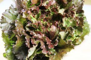 Batavia-Salat