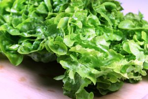 Eichblatt-Kopfsalat