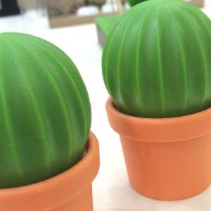 Qualy-Cactus