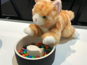 magisso-cat-bowl