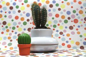 Kräutertopf-Cactus