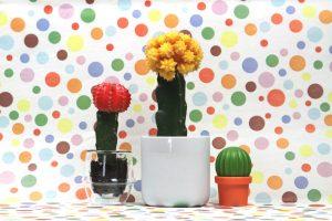 Kronos-Becher-weiss-Cactus