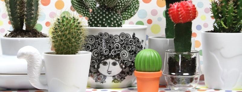 Mein kleiner grüner Kaktus …