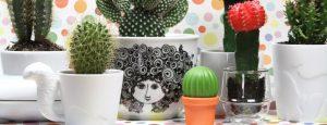 Mein-kleiner-grüner-Kaktus