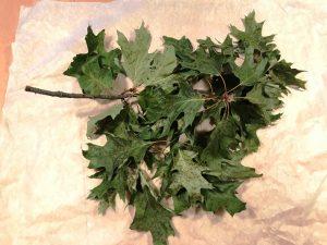 Ast-Blätter