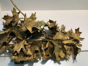 Goldener-Blätterast